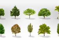 Trees-Vector-Collection-Pack