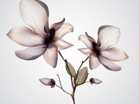 Orchid-Flower-Vector