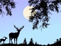 Nature-Scene-Vector-with-Deer