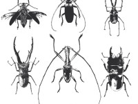 Free-Beetle-Vector-Pack