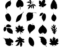 20-Vector-Collection-of-Leaf-Silhouettes