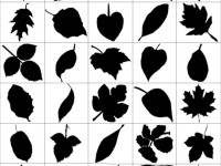 80-Leaf-Silhouettes-Free-vector-&-Brush-Pack