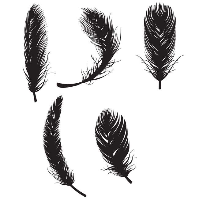feather free vectors - free vector site | download free vector art