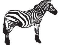 Zebra-Free-Vector-Resource