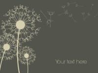 Dandelion-Background