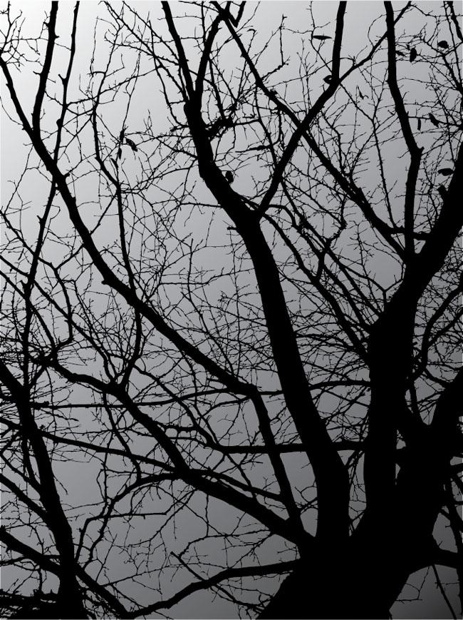 Dark-Tree-Vector