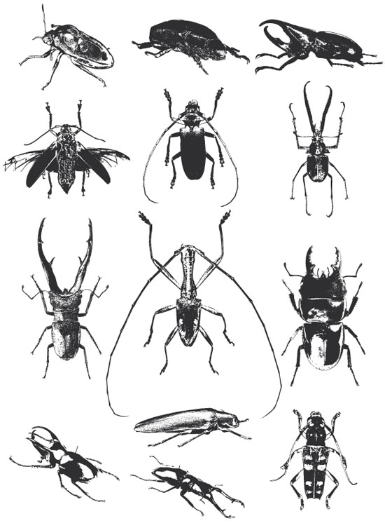Free-Beetle-Vector-Pack