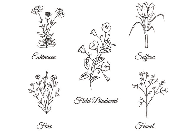 Hand-drawn-flowers-collection
